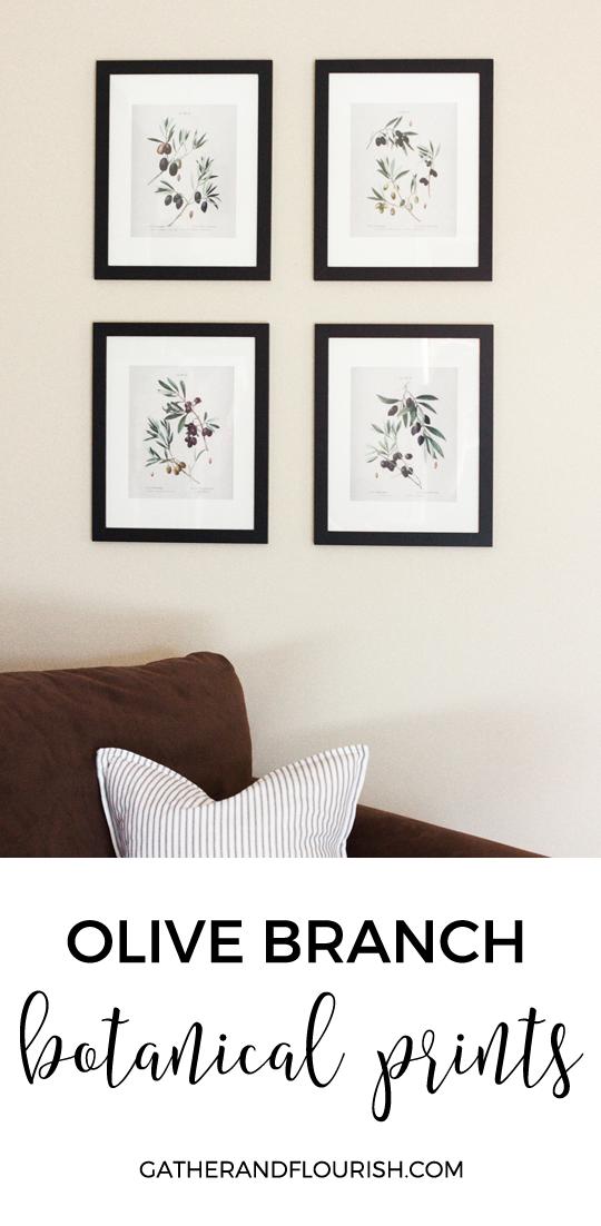 FREE printable olive branch botanical prints   Gather and Flourish