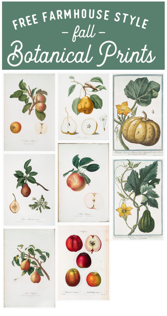 Free Fall Botanical Prints Round-Up